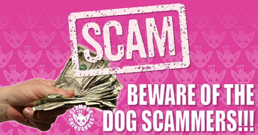 Beware Dog and Puppy Scammers banner image