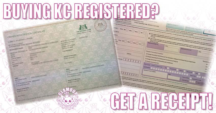 Buying a KC Registered Dog banner image