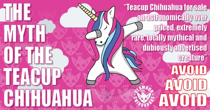 The Myth of the Teacup Chihuahua banner image